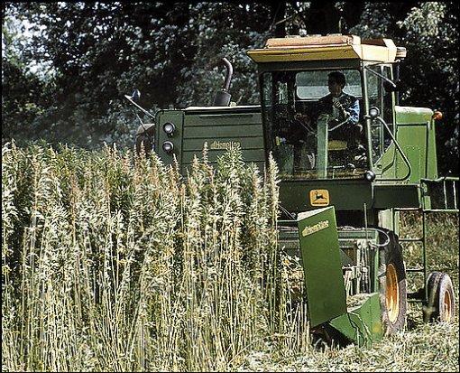 Industrial hemp. We really need it back..