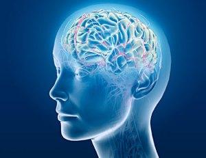 brain-biology-medical-research-biology-01-af
